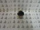 Aprilia Leonardo 125ccm önindító relé