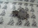 Malaguti F18 Warrior bontott benzincsap
